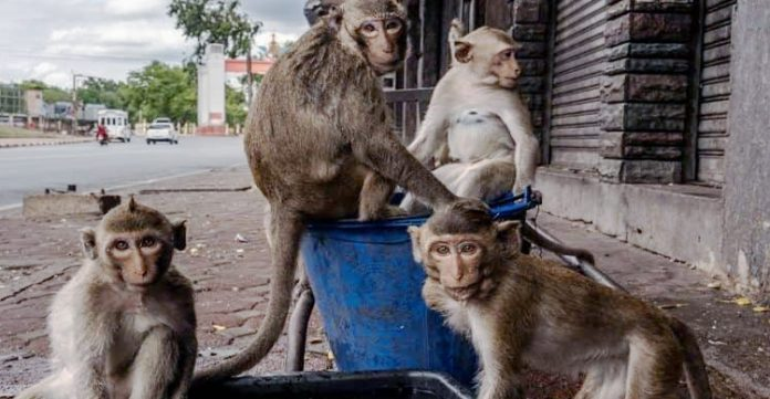 Around 70 monkeys found mysteriously killed in Mahbubabad