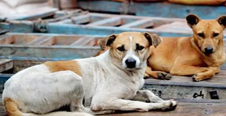 Gauhati High Court Puts Nagaland Govt's Ban on Dog Meat on Hold | Y This  News