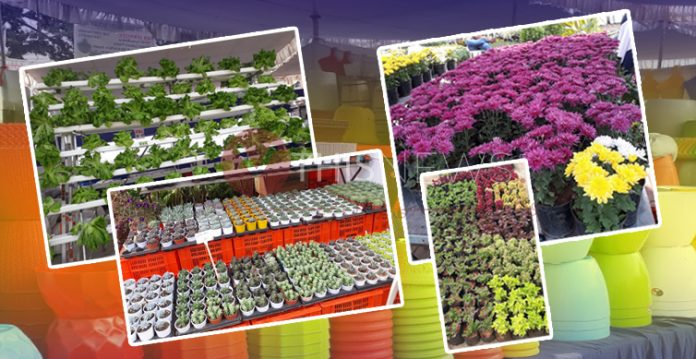 9th Grand Nursery Mela Begins With A Soothing Display Of Flora