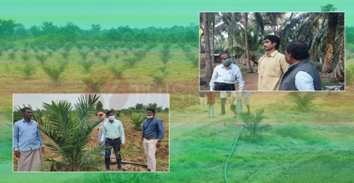 With bravado, Govt. increased the area of oil palm cultivation in the state
