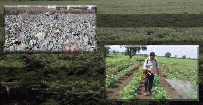 Bootless Real Estate Boom Affecting Veggies Supply To Hyderabad