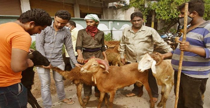 'cattle mafia' became active ahead of eid while muslim families feel helpless