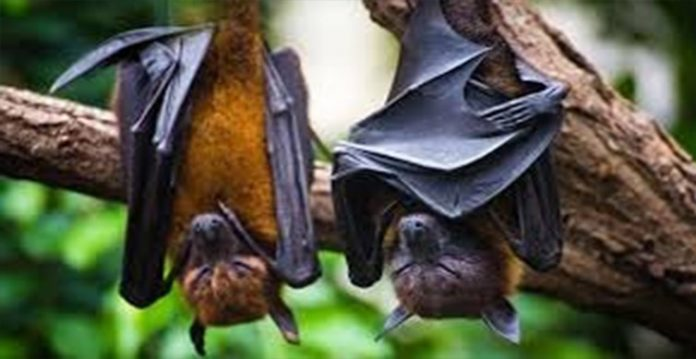 UK Scientists Find Covid 19 Related Virus In Bats; Global Vaccination Campaign Critical Than Ever